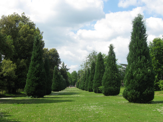 Yet another avenue in the gardens at Ashridge House