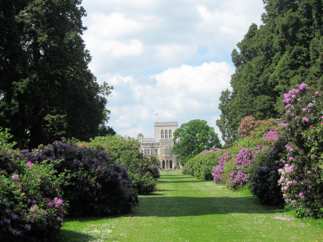Rhododendrons on the Wellontonia Avenue, Ashridge House