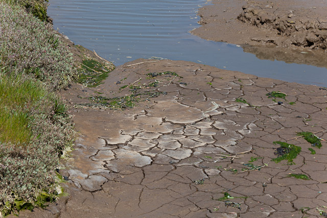 Detail of mudflat beside River Blyth