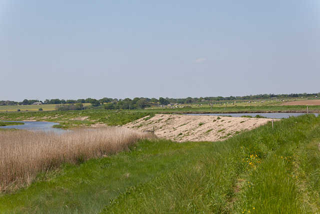 Raised footpath on Tinker's Marshes