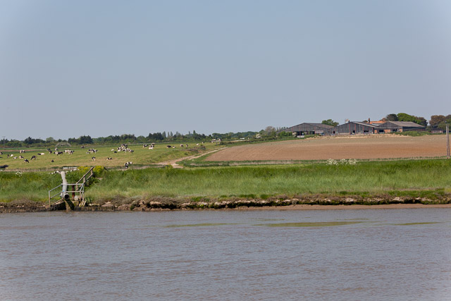 Outfall in vicinity of Reydon Quay