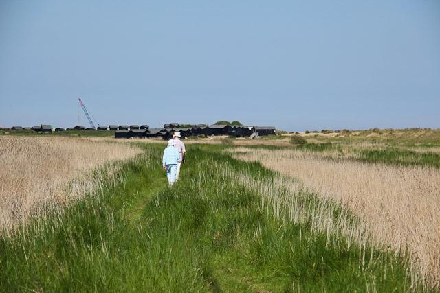Footpath through Town Salts marshes