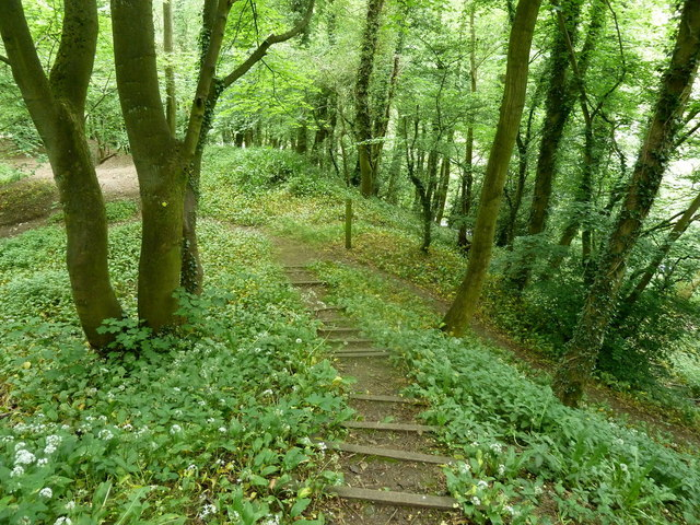 Steep woodland footpath to the River Amber