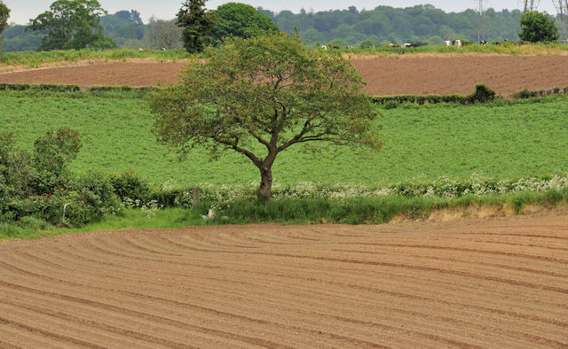 Ploughed fields, Tullynacross near Lisburn (3)