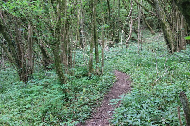 Footpath through Frampton Woods