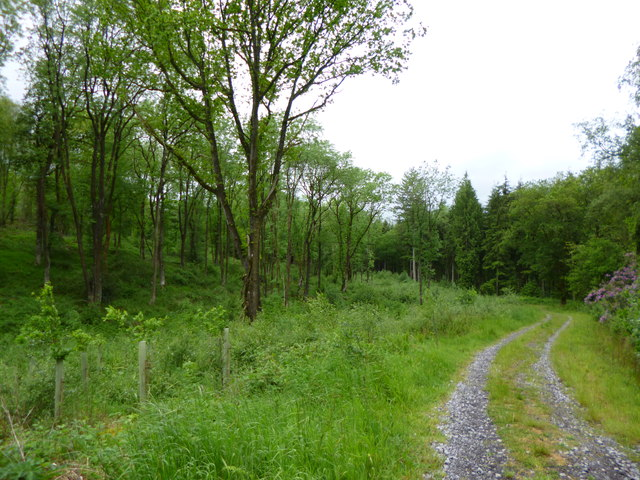 Blackslough Wood