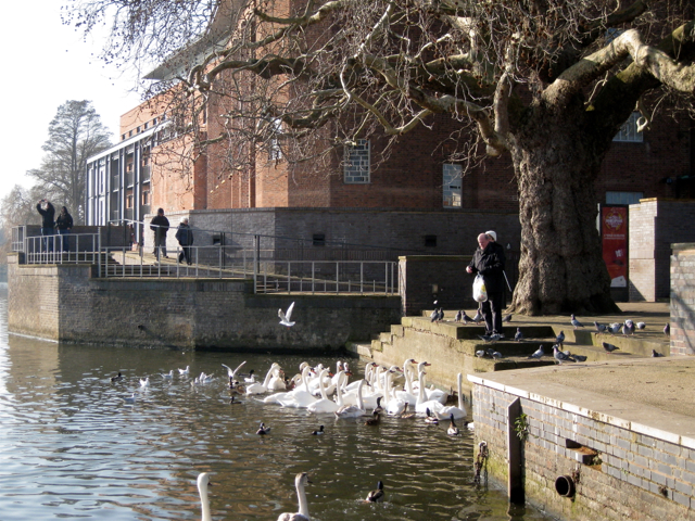 Feeding the swans near the Royal Shakespeare Theatre