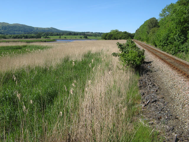 Railway and reed beds