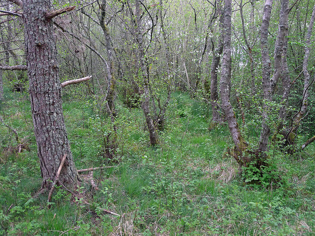 Mixed woodland of the Roskill SSSI