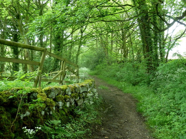 Woodland footpath near Kelstedge