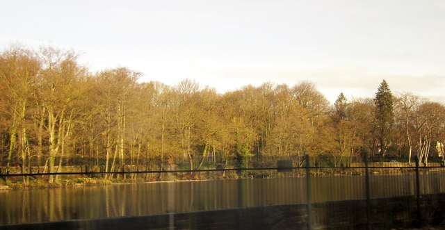Mill Pond, Abbeydale
