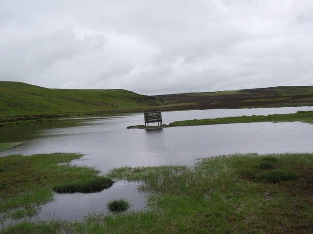 Llyn Henllyn Pool
