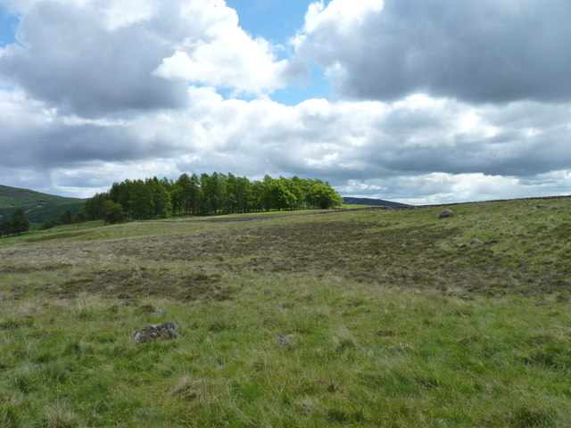 Whitehill wood