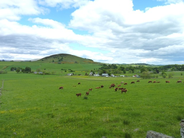 Cattle in Glenisla