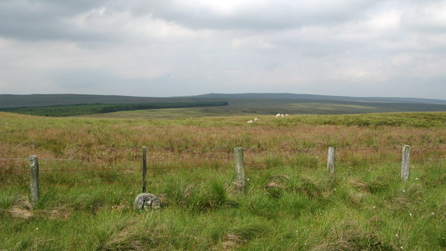 Boundary stone and fence on moorland above West Allendale