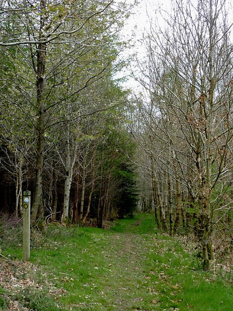 Woodland footpath south-west of Newbridge, Powys