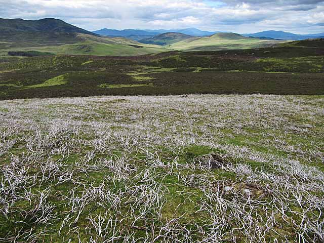 Heather moorland near Shinagag