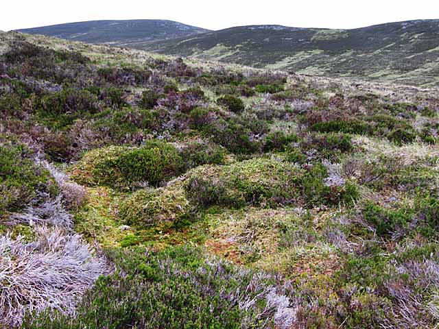 Moorland of heather and bog SW of Ben Vuirich