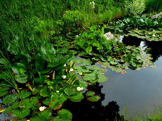 Peak's Pond