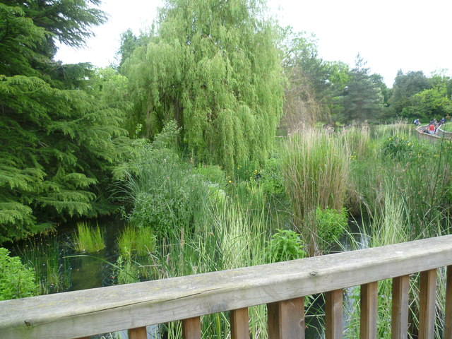 Boardwalk and lake in Dulwich Park