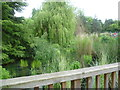 TQ3373 : Boardwalk and lake in Dulwich Park by Ian Yarham