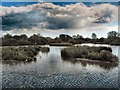 TQ0208 : Swan Lake- Arundel Wetlands Centre by Paul Gillett