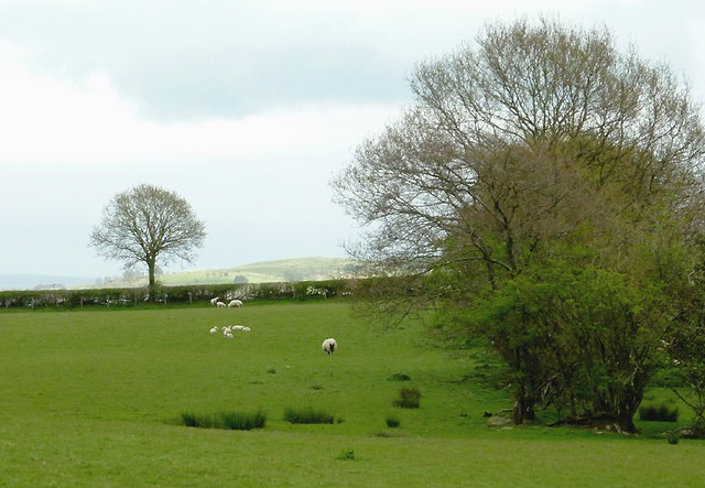 Pasture south-west of Llandrindod Wells, Powys