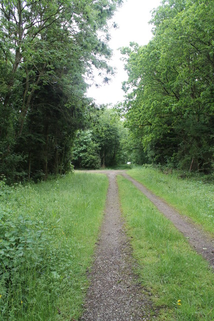 Track into Foxhall Wood