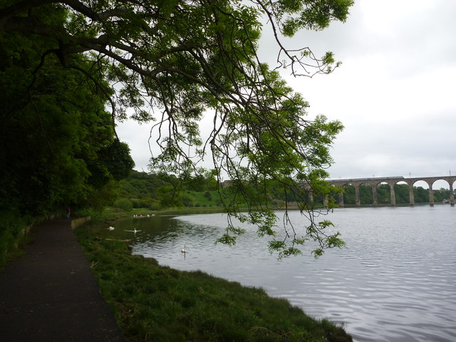 Coastal Berwickshire : Riverbank Walk Beside the Lower Pool of The Tweed, Berwick