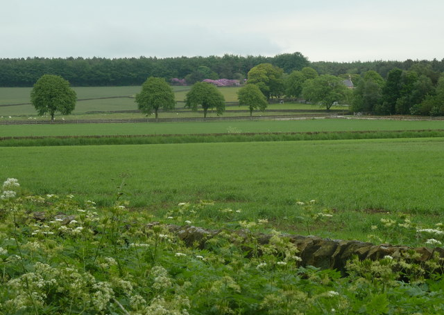 Fields near Moor House