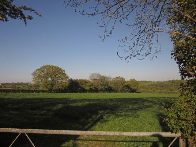 Field by Viney Lane