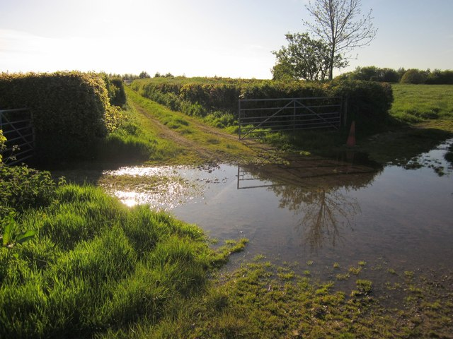 Puddle by Viney Lane