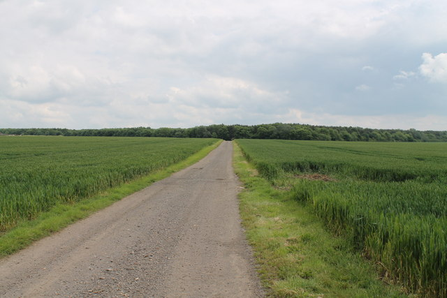 Road to Brumpton's Farm