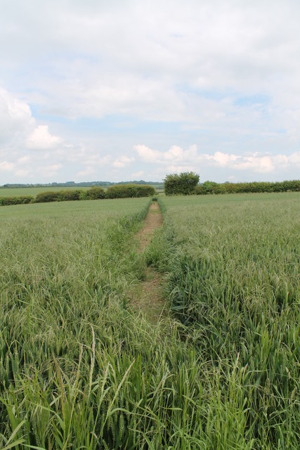 Public Bridleway through the field