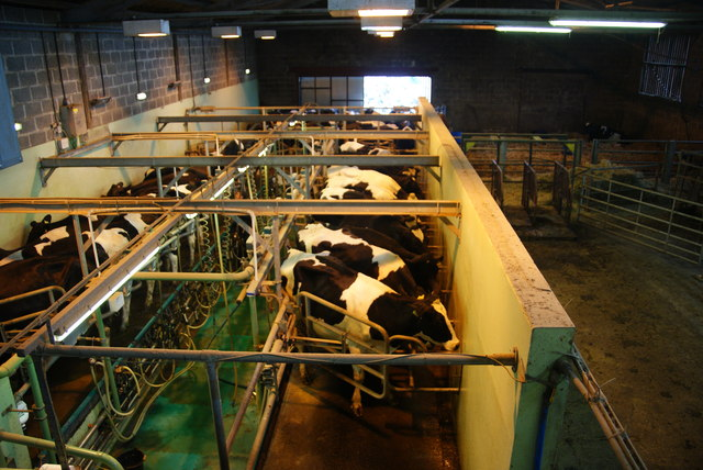 Milking time at Bishop Burton College