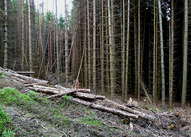 Forestry in the Yarrow Valley