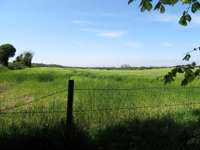 Arable land between Dufferin Avenue and Castleward Bay