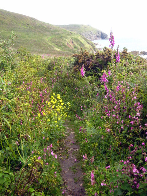 Wild flowers lining the path leading down to the eastern end of Praa Sands
