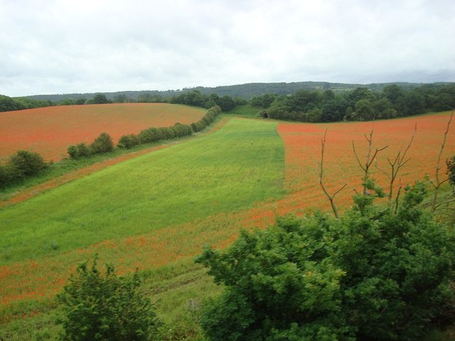 Poppy Fields near Blackstone, Bewdley