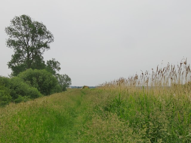 Along the bank of the Burwell Lode
