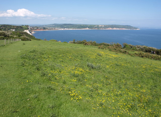 Clifftop grassland north of Beer Head