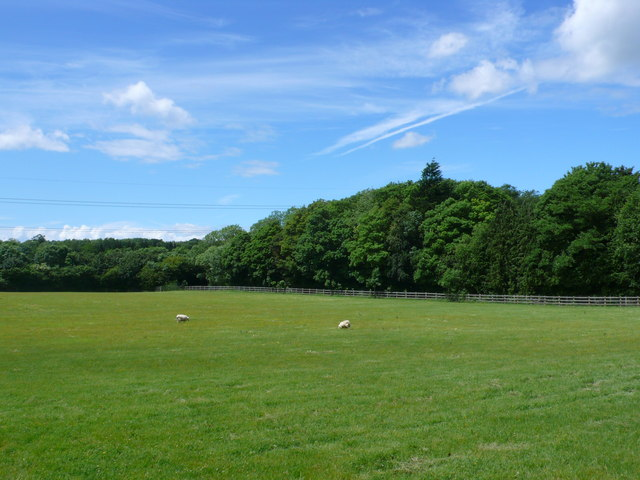 Pasture Field near Cirencester
