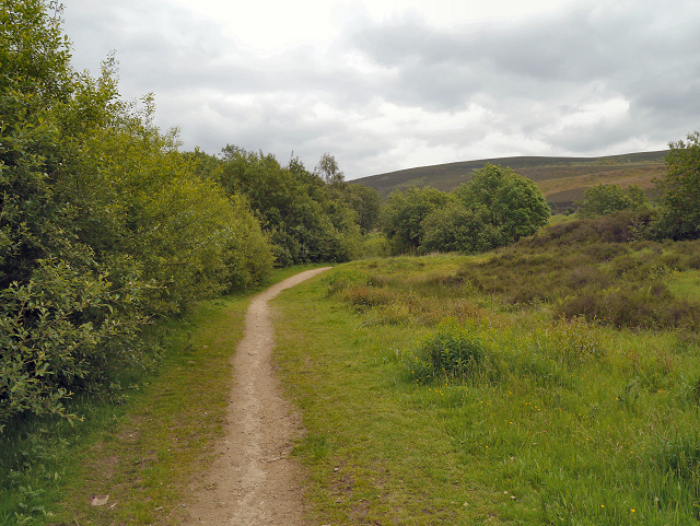 Path Through Walker Wood, Stalybridge Country Park
