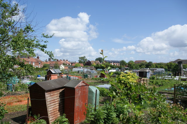 Allotments on the edge of Beverley