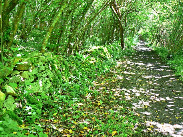 Drystone wall, Wysis Way through Siccaridge Wood, near Daneway, Gloucestershire