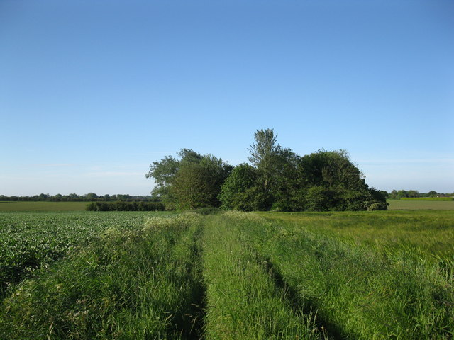 Small copse and track