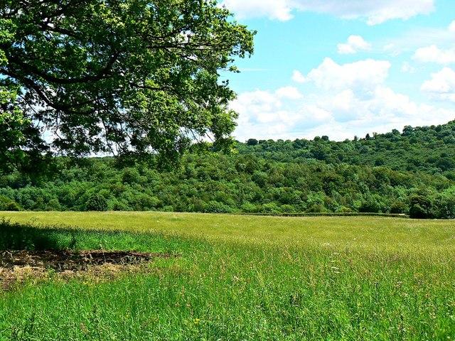 Field, Trillis, near Frampton Mansell