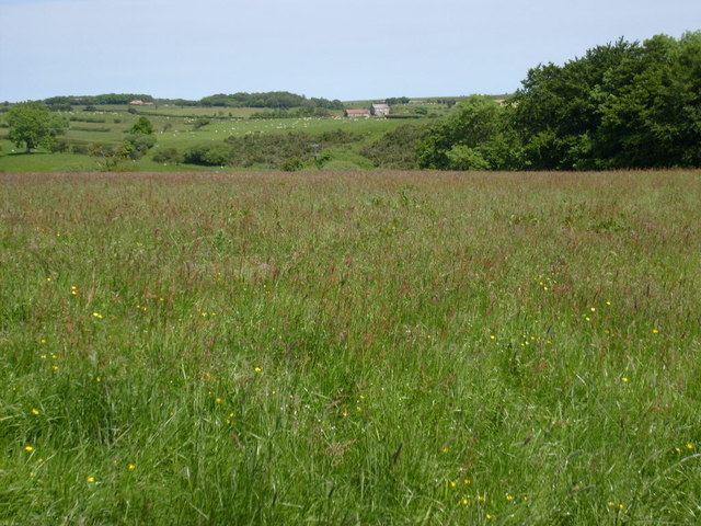 Looking across Laverick Dale