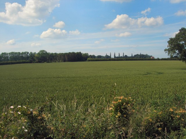 Farm near Wittersham Road