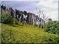 W3234 : Edge of forestry : Week 25